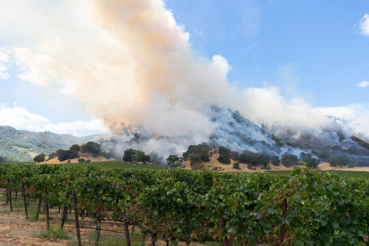 Napa Valley Wildfire Relief Endsight Will Double Your Donation
